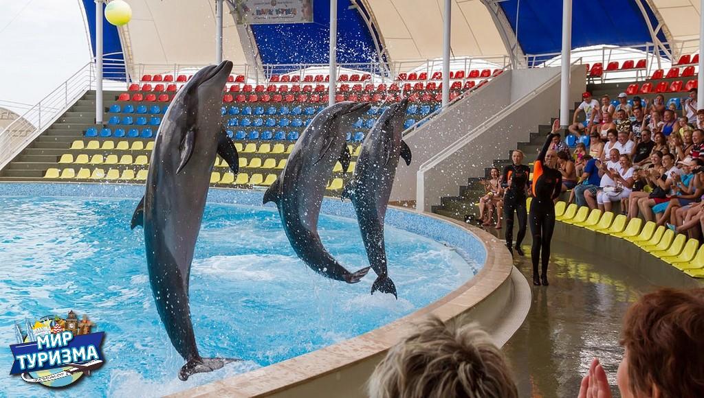 15 Дельфинарий Коктебель