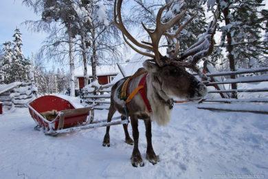 Новогодний тур в ФИНЛЯНДИЮ (КУОПИО)